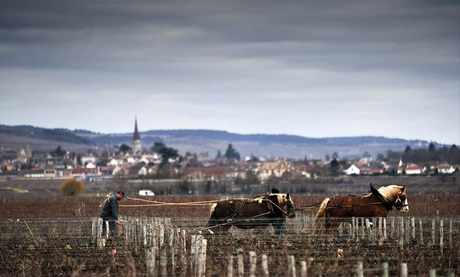 Domaine Michel Bouzereau: la Borgogna dei piccoli grandi domaines