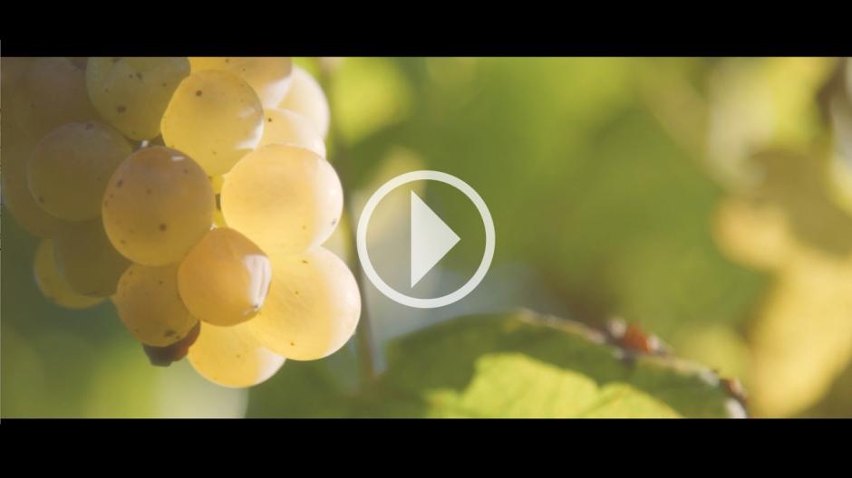 VIDEO 1 - ERBALUCE DI CALUSO